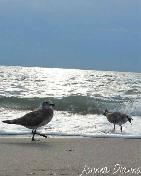 """""""OMG this water is cold!!!"""" #seagulls #beach  #unexpected  #photography"""