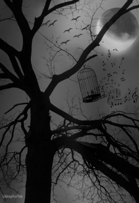 quotes moon imagination tree blackandwhite