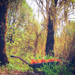 retro trees wheelbarrow flowers blossom