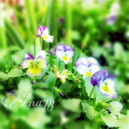 flower colorful bokeh nature