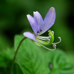 flower photography macro photography macro nature