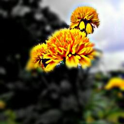 blacknwhite blur hdr photography love