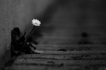 deeliriouss photography blackandwhite emotions nature