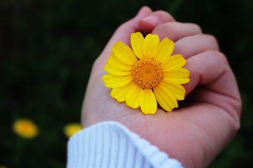 taken_by_me flowers