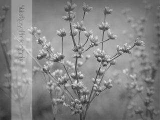 blackandwhite flower nature photography hdr