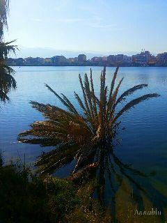 nature photography postcard lake