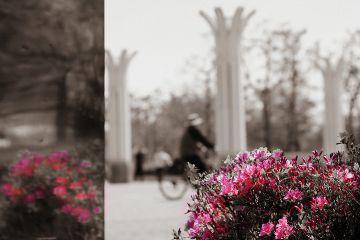 mirror spring photography