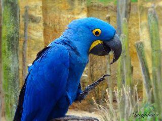 zoo animal bird color photography