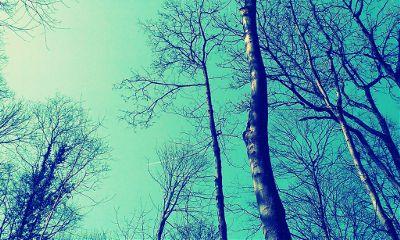 frühling blauerhimmel spaziergangimwald wald bäume