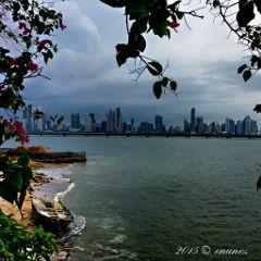 photography panama ocean beach flower
