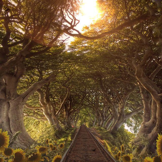 Nature photo creative edit by @melissa_vincent
