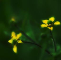 nature flower summer