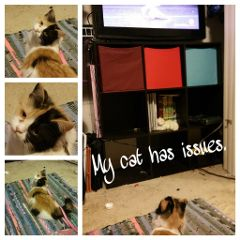 catwithissues