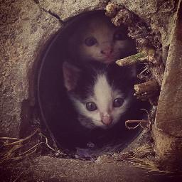 gatinos mininos monissimosss cats