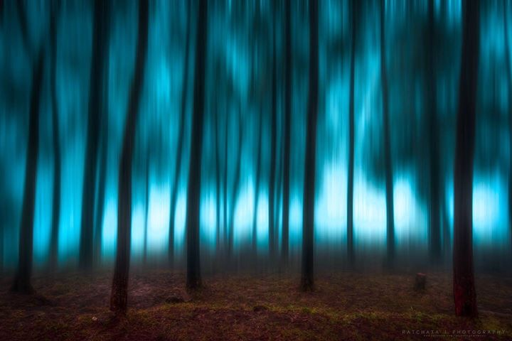 forest blur background trees nature