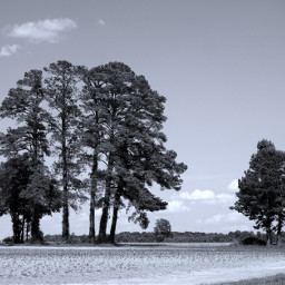stark blackandwhite trees nature rural