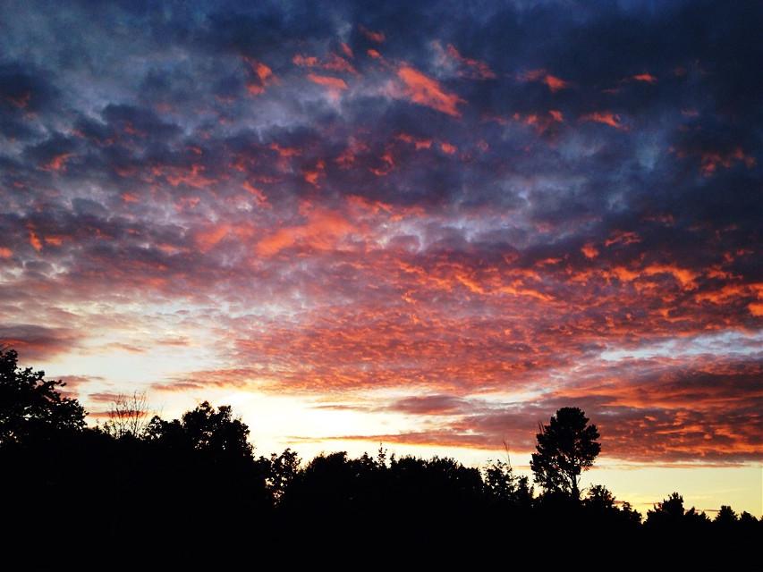#vibrant  #crossprocess  #sunset  #trees