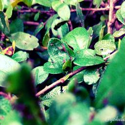 nearandfar colorful flower nature photography