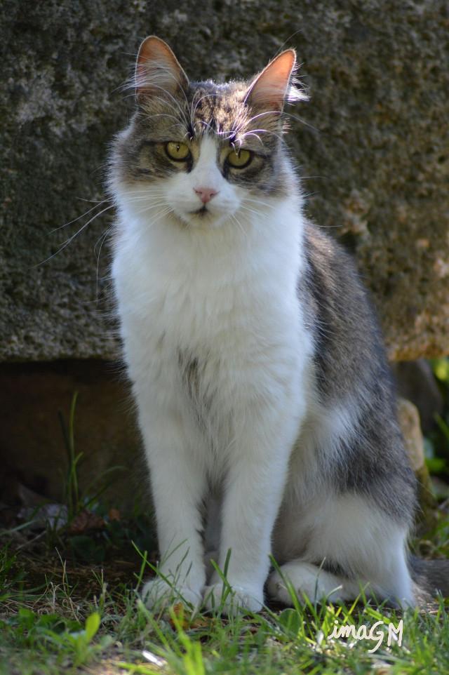 #photography #petsandanimals #cat Morning my friends