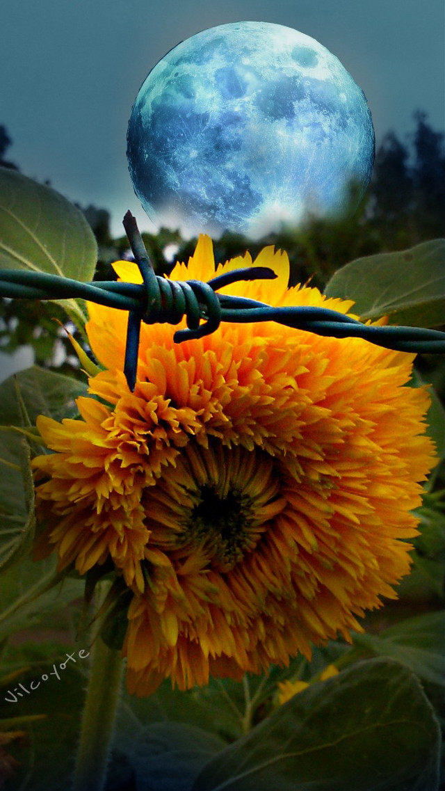 E a quel punto... I rimorsi faranno più male  Dei morsi.   #collage #emotions #hdr #flower #colorsplash #nature #photography #quotesandsayings #summer