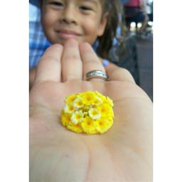 lovemyboo beautiful yellow flowers