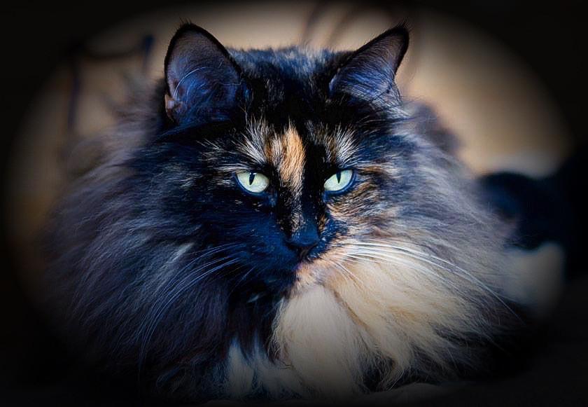 Happy Birthday Rosie 💕   #cat  #petsandanimals