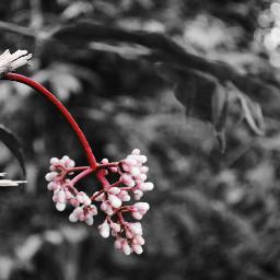 colorsplash flower iamnikon nikon_photograph nikon_photograph_nature