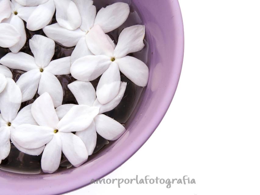 #flower  #jazmin  #interesting