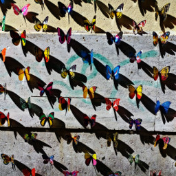 lines rome hdr colorful petsandanimals