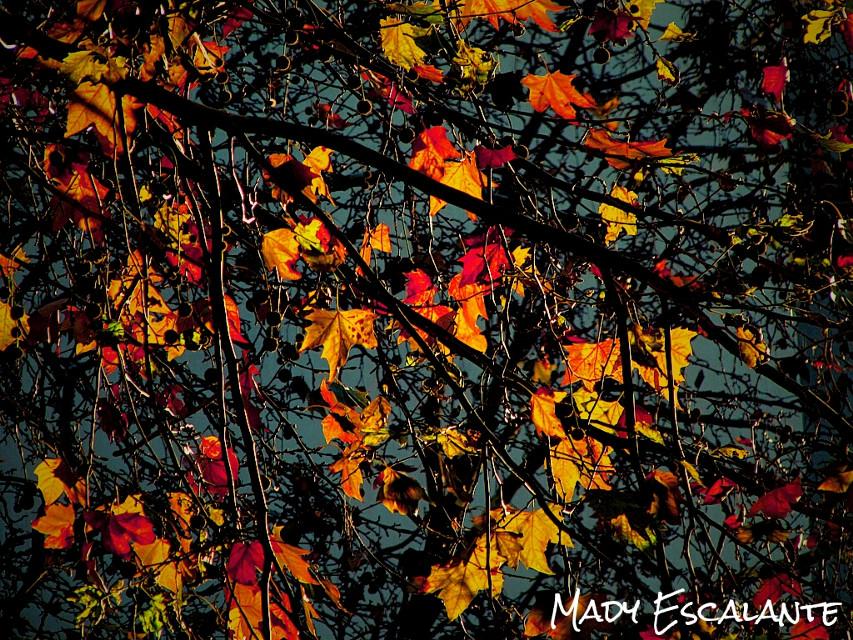 #autumnleave #photography #nature #colorful #WAPautumn