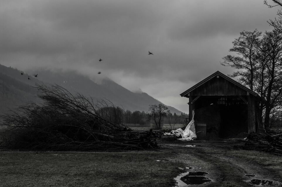 #blackandwhite #photography #nature #rain