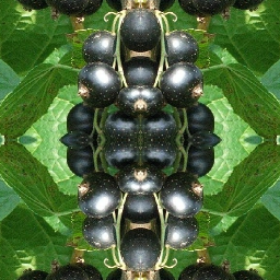 fruits cassis miror distorted