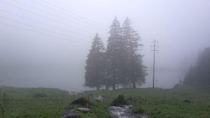 fog nature photo photography