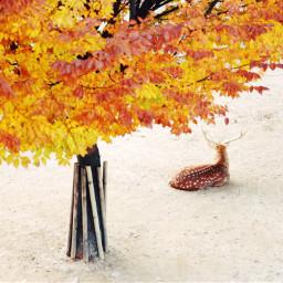 deer natural trip travel fall maple