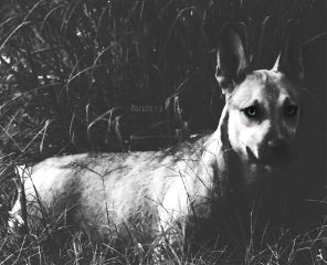 portrait blackandwhite dog colorpop nikon